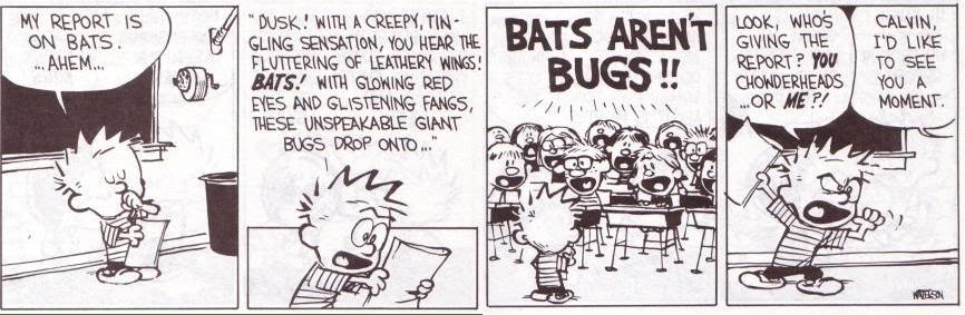 bats-arent-bugs